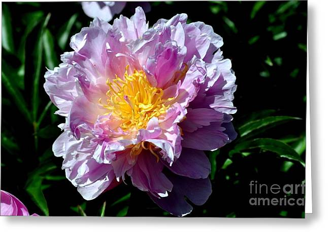 Floral Digital Art Digital Art Greeting Cards - Purple Peony Greeting Card by Mandy Judson