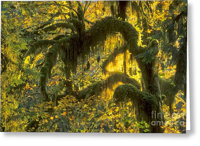 Forest Floor Greeting Cards - Queets Rain Forest, Olympic Np Greeting Card by Richard and Ellen Thane