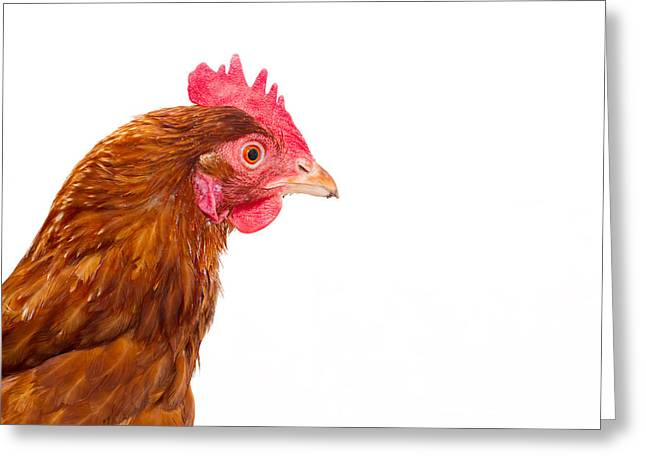 Free Range Hens Greeting Cards - Rhode Island Red Chicken Isolated  Greeting Card by Fizzy Image