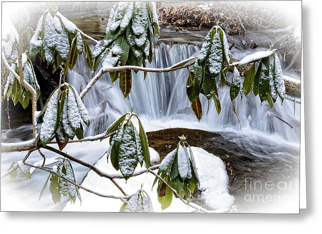 Clean Water Greeting Cards - Rhododendron and Waterfall Greeting Card by Thomas R Fletcher