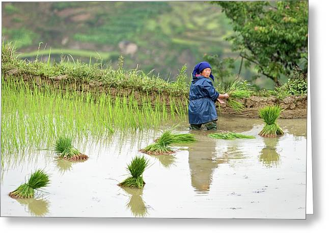 Rice Cultivation In Yunnan Province Greeting Card by Tony Camacho