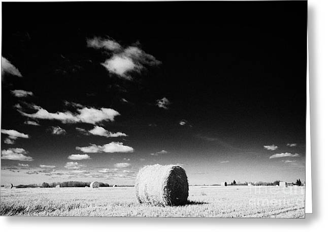 Canadian Prairie Landscape Greeting Cards - rolled hay bales on the prairies after harvest Saskatchewan Canada Greeting Card by Joe Fox