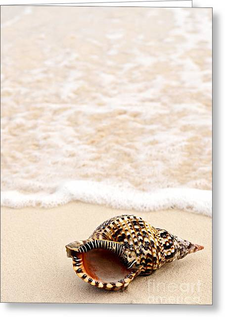 Concept Photographs Greeting Cards - Seashell and ocean wave Greeting Card by Elena Elisseeva
