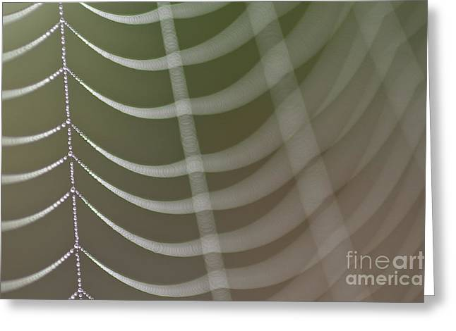Predaceous Greeting Cards - Spider web with dew drops  Greeting Card by Jim Corwin