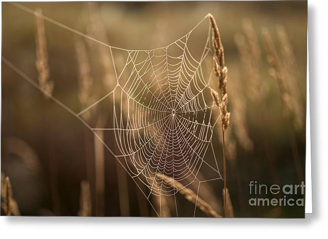 Close Focus Nature Scene Greeting Cards - Spider webs in field on tall grass Greeting Card by Jim Corwin
