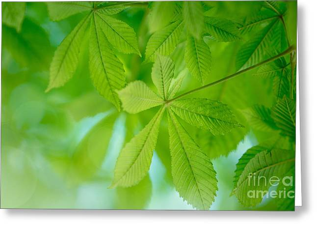 Buckeyes Greeting Cards - Spring Green Greeting Card by Nailia Schwarz