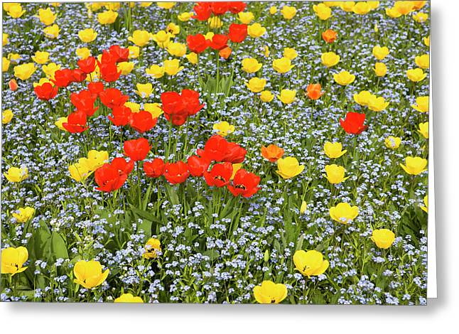 Spring In Herastrau Park In The City Greeting Card by Martin Zwick