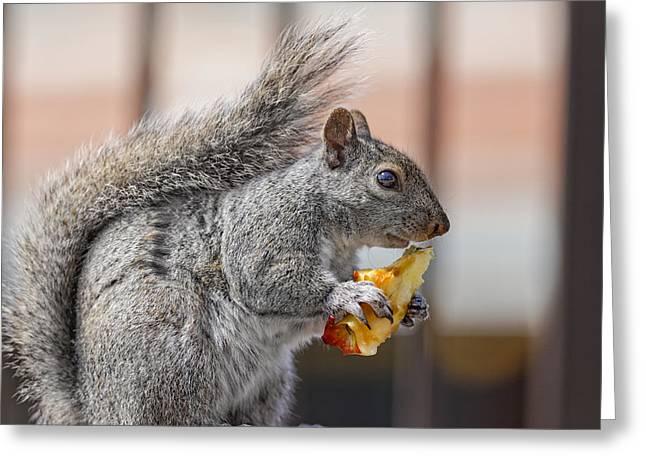 Sciurus Carolinensis Greeting Cards - Squirrel Greeting Card by Peter Lakomy
