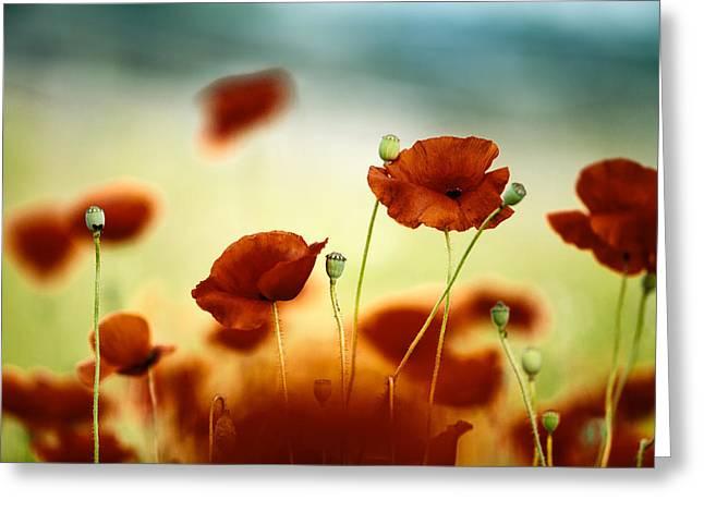 Red Poppy Greeting Cards - Summer Poppy Greeting Card by Nailia Schwarz