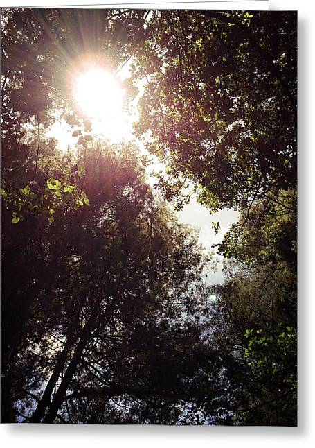 Sunlight Greeting Card by Les Cunliffe