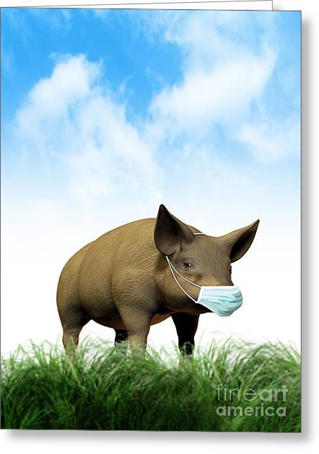 Porcine Animal Greeting Cards - Swine Flu, Conceptual Image Greeting Card by Victor Habbick Visions
