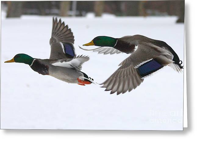 Blue And Green Greeting Cards - The Great Race Greeting Card by John Telfer