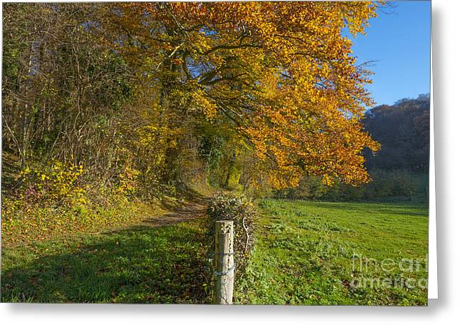 Limburg Greeting Cards - Track in a sunny forest at fall  Greeting Card by Jan Marijs
