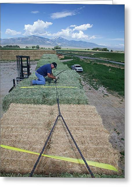 Transporting Bales Of Hay Greeting Card by Jim West