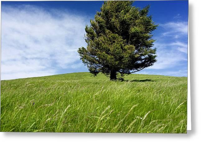 Auvergne Greeting Cards - Tree Greeting Card by Bernard Jaubert