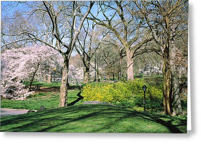 In-city Greeting Cards - Trees In A Park, Central Park Greeting Card by Panoramic Images
