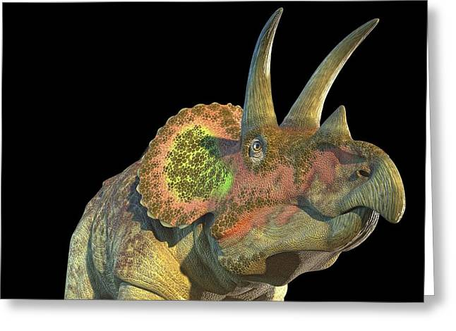 Triceratops Dinosaur Greeting Card by Roger Harris