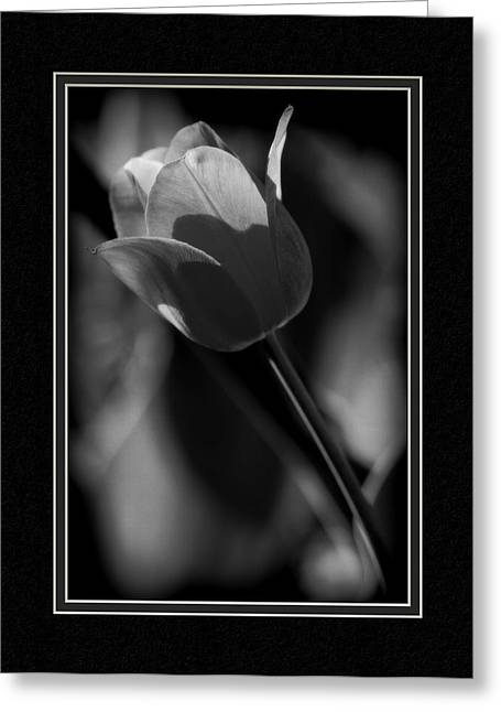 Matting Greeting Cards - Tulip CloseUp Greeting Card by Charles Feagans