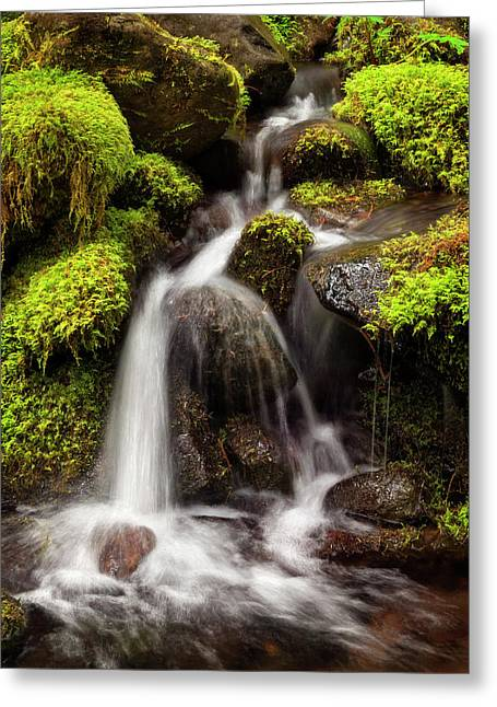 Usa, Washington State, Olympic National Greeting Card by Ann Collins