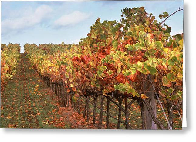 Vineyard Landscape Greeting Cards - Vineyard, Napa Valley, California, Usa Greeting Card by Panoramic Images
