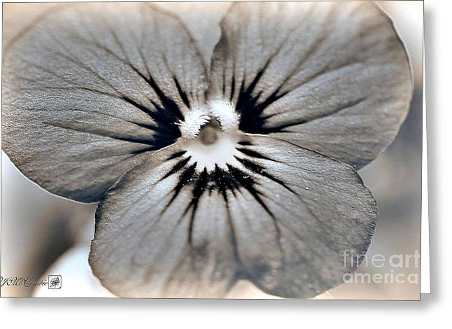 Sorbet Digital Art Greeting Cards - Viola named Sorbet Blue Heaven Jump-Up Greeting Card by J McCombie