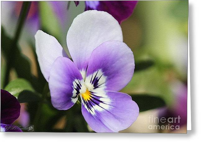 Sorbet Digital Art Greeting Cards - Viola named Sorbet Marina Baby Face Greeting Card by J McCombie