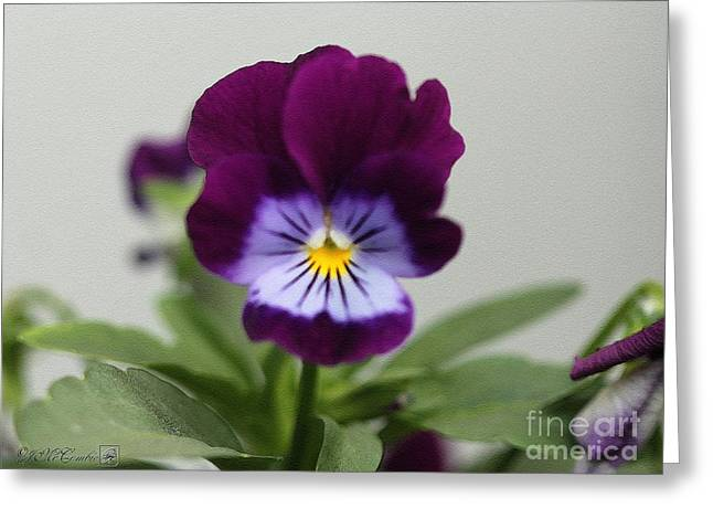 Sorbet Digital Art Greeting Cards - Viola named Sorbet Plum Velvet Jump-Up Greeting Card by J McCombie