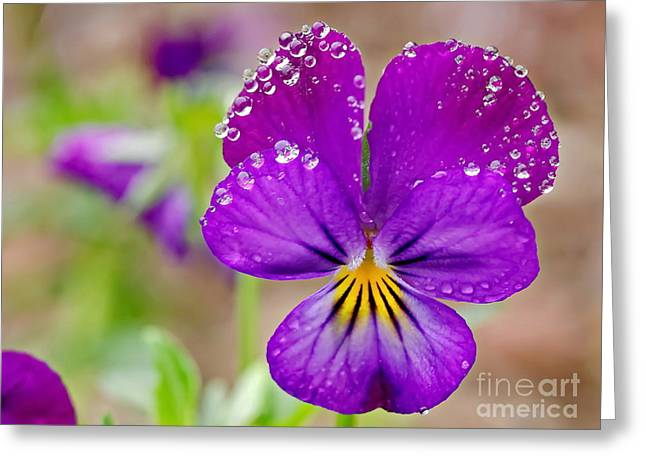 My Ocean Greeting Cards - Violets Greeting Card by   FLJohnson Photography