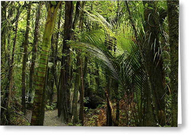 Tropical Photographs Greeting Cards - Walking trail Greeting Card by Les Cunliffe