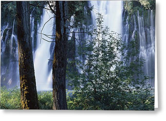 Strength Photographs Greeting Cards - Waterfall In A Forest, Mcarthur-burney Greeting Card by Panoramic Images