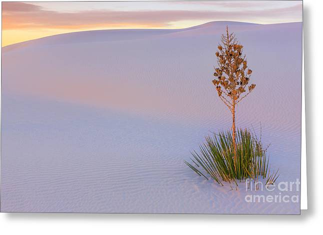 Acryl Greeting Cards - White Sands National Monument Greeting Card by Henk Meijer Photography