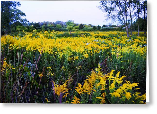 Nature Scene Digital Art Greeting Cards - Wild Flowers Greeting Card by Adam Asar