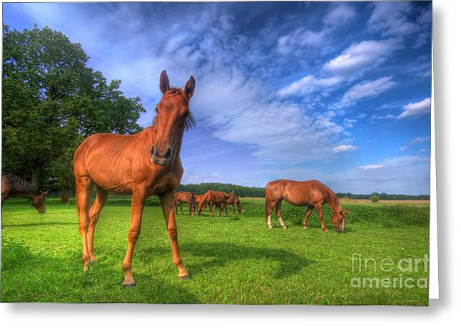 Subtle Colors Greeting Cards - Wild horses on the field Greeting Card by Michal Bednarek