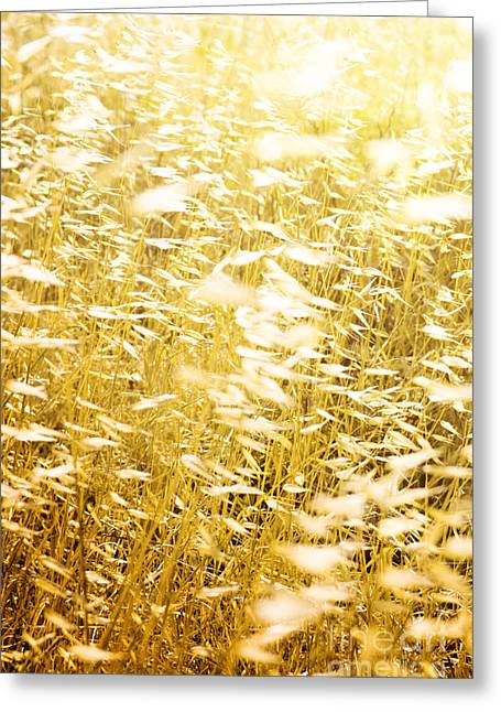 Backlit Greeting Cards - Wild Spikes Greeting Card by Carlos Caetano