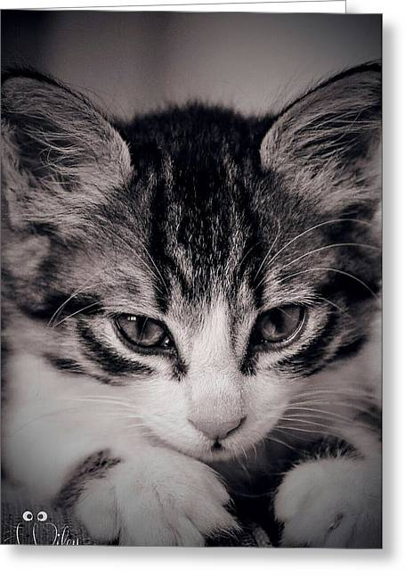 Cute Kitten Pyrography Greeting Cards - Wiley the cat Greeting Card by Rawdha Thornton