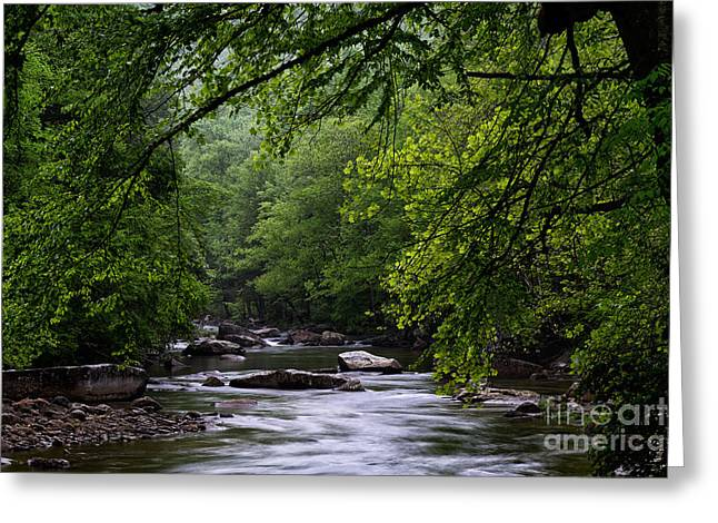 Trout Stream Landscape Greeting Cards - Williams River Spring Greeting Card by Thomas R Fletcher