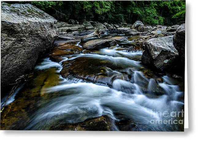 Trout Stream Landscape Greeting Cards - Williams River Summer Greeting Card by Thomas R Fletcher
