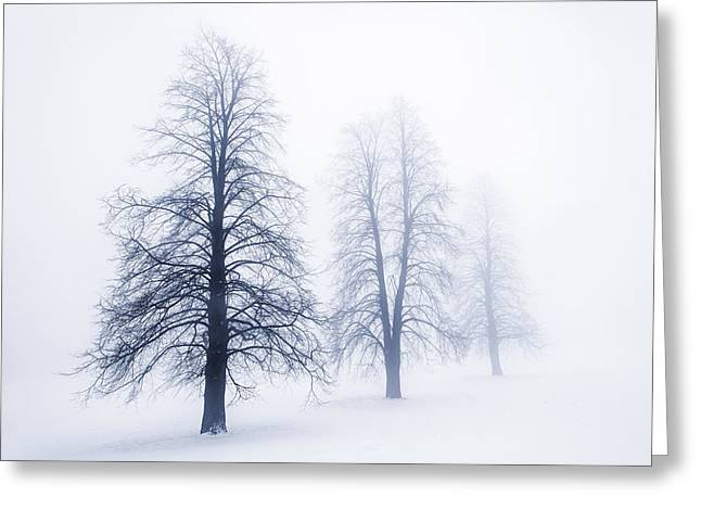 Three Trees Greeting Cards - Winter trees in fog Greeting Card by Elena Elisseeva