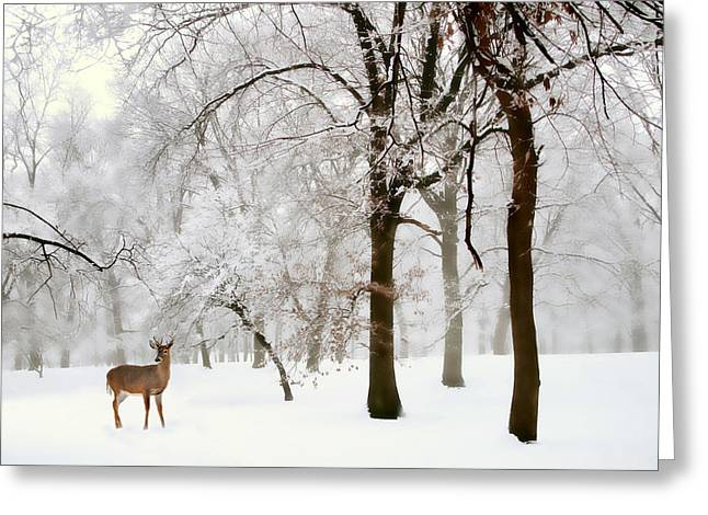 Winter Trees Greeting Cards - Winters Breath Greeting Card by Jessica Jenney