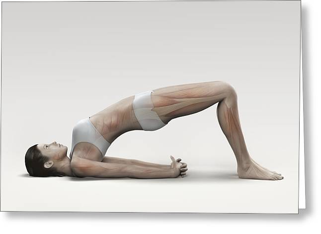 Physical Body Greeting Cards - Yoga Bridge Pose Greeting Card by Science Picture Co