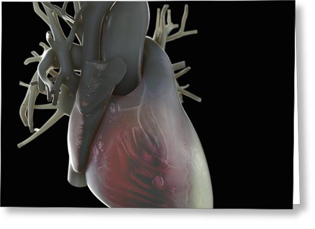 Ventricles Greeting Cards - Heart Anatomy Greeting Card by Science Picture Co