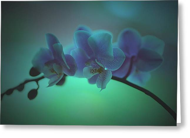 Mini Pyrography Greeting Cards - Orchids Greeting Card by Michael James Greene