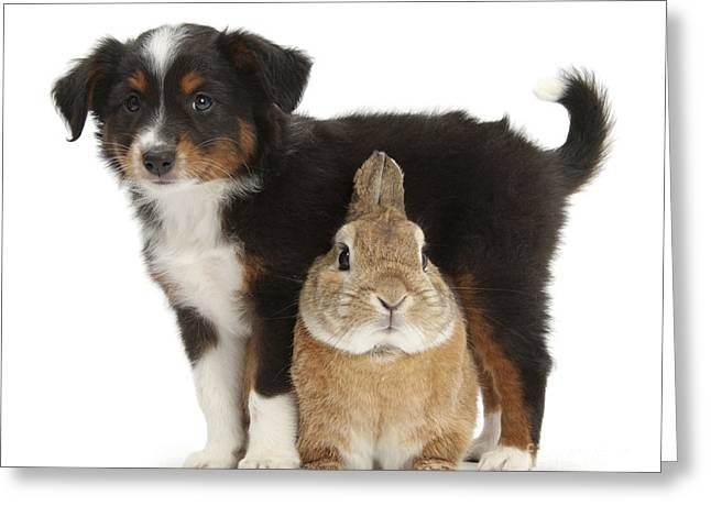 House Pet Greeting Cards - Puppy And Rabbit Greeting Card by Mark Taylor
