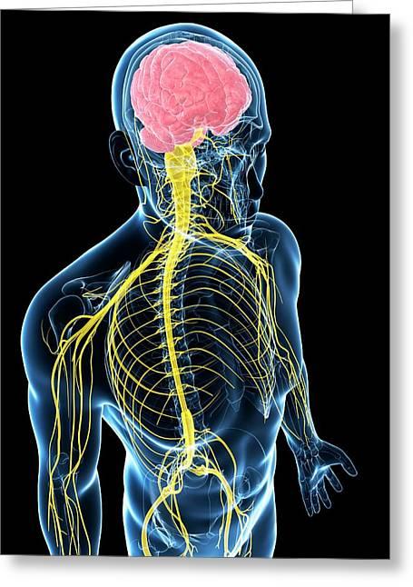 Human Nervous System Greeting Card by Sebastian Kaulitzki