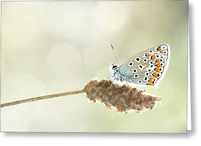 Sensors Greeting Cards - Butterfly Greeting Card by Heike Hultsch