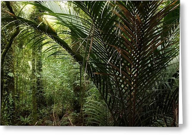 Botanical Greeting Cards - Jungle Greeting Card by Les Cunliffe