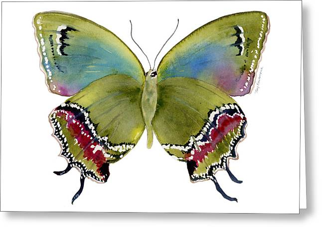 Moths Greeting Cards - 46 Evenus Teresina Butterfly Greeting Card by Amy Kirkpatrick
