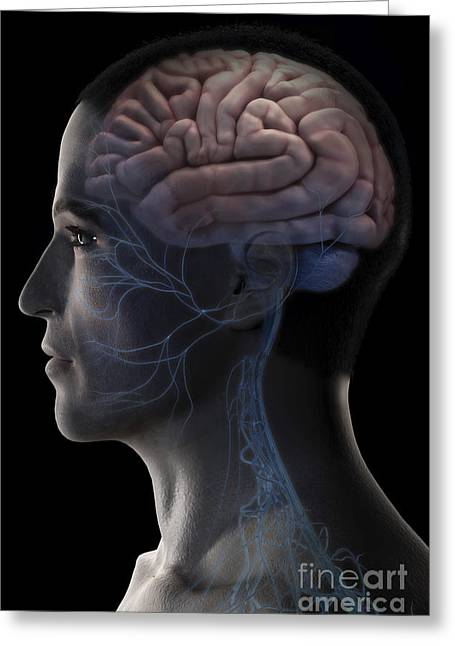 Cerebral Cortex Greeting Cards - Human Brain Greeting Card by Science Picture Co