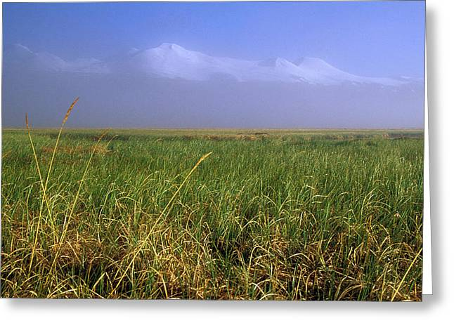 Grass Greeting Cards - Altay Greeting Card by Anonymous