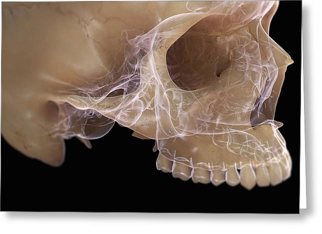 Aperture Greeting Cards - Anatomy Of The Skull Greeting Card by Science Picture Co